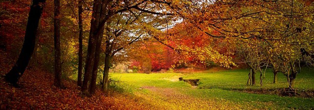 Le meilleur de l'automne, nos 10 incontournables